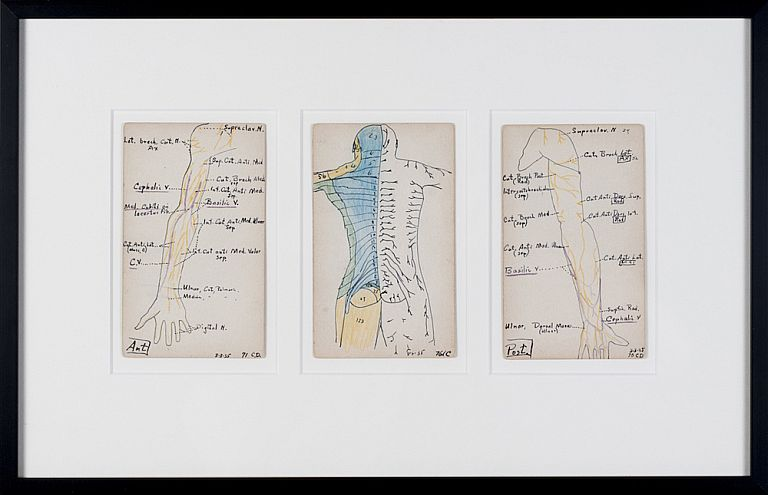 Set of 3 Medical Drawings [torso back]. Siegfried Berthelsdorf.