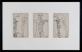 Set of 3 Medical Drawings [torso front]. Siegfried Berthelsdorf